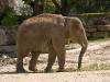 zoo280708_028