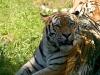 zoo280708_125