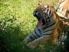 zoo280708_128